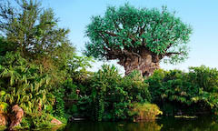 Entradas: Parque Disney´s Animal Kingdom